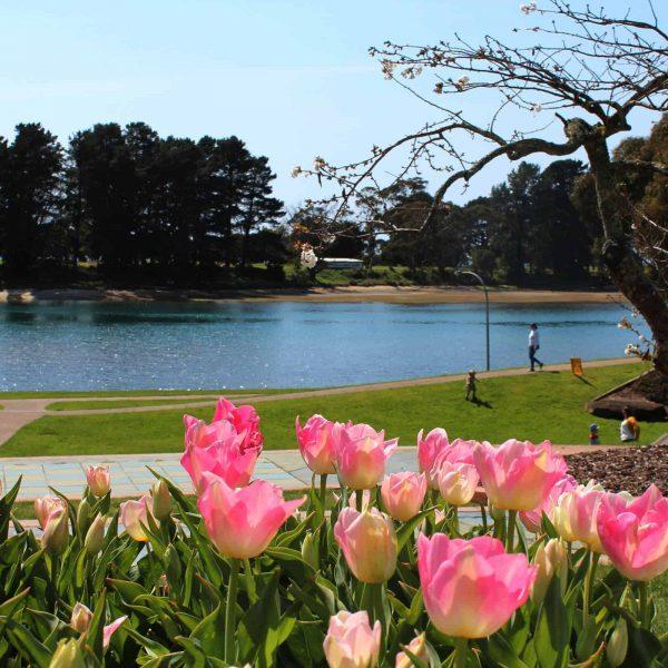 Waratah Wynyard Council - Gutteridge Gardens